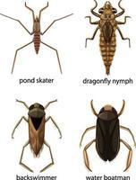 Conjunto de diferentes tipos de insectos y escarabajos con nombre. vector