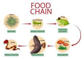 Food chain diagram concept vector