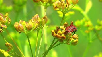 Green Plant and Flying Insects video