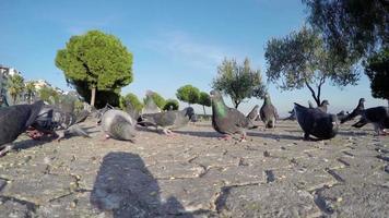 pombos no chão de pedra