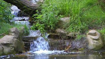 le ruisseau et l'ours video