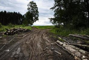 camino fangoso a través de un bosque caducifolio foto