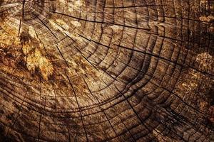 Old stump texture photo