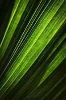 resumen de hoja verde foto