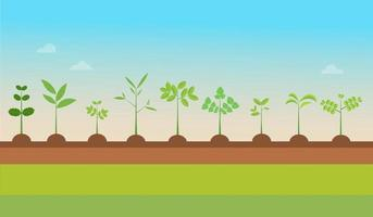 Plant Types grow with nature background.Vector illustration.Seedling green trees.Plants set on ground.Garden tree seedling vector