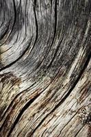Rustic worn wood photo