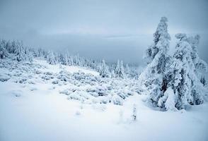 Gloomy winter landscape photo