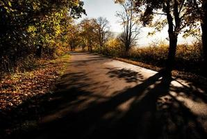 Morning on a road in autumn photo
