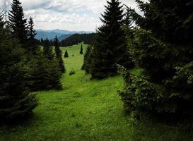 prado de montaña verde con árboles