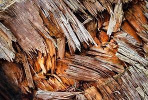Broken and torn wood