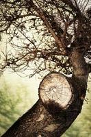 Detalle de un árbol con una rama cortada foto