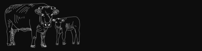 Banner de pizarra de carnicería con vacas vector