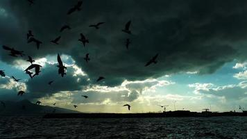 Seagulls Silhouetted and the Sea Under Dark Clouds