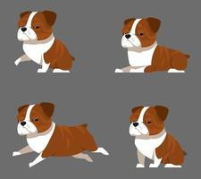 English bulldog in different poses. vector