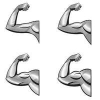 diferentes brazos con bíceps contraídos. Ilustración de músculos en estilo grabado. vector
