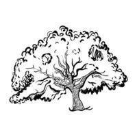 Oak Tree Drawing vector