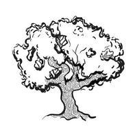 dibujo de arbol de eucalipto vector