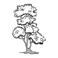 dibujo de arbol bonsai vector