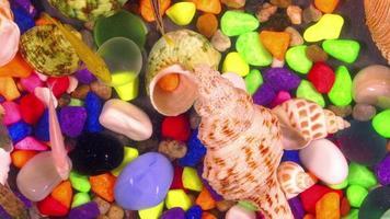 peixes na água pura do aquário