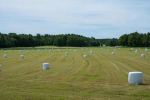 Harvested field filled with white spools of hay