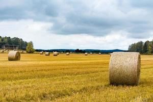 View of a newly harvested hay field with large spools of hay