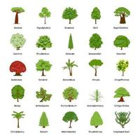 Common Types of Trees vector