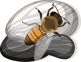 Top view of bee on a stone on white background vector