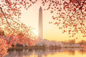 Washington Monument during the Cherry Blossom Festival photo