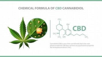 White poster with chemical formula of CBD cannabidiol and green leaf of cannabis with 3D molecules of chemical formulas of CBD cannabidiol vector