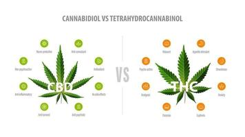 White banner with comparison CBD and THC. CBD vs THC, list of differences with icons and green leafs of cannabis and hemp. vector