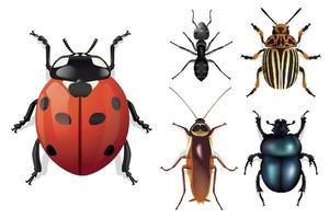 presentación de los principales insectos vistos desde arriba vector