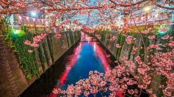 flor de cerezo, en, meguro, canal, en, tokio, japón foto