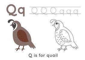 Página para colorear con la letra q y codorniz de dibujos animados lindo. vector