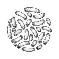 bacterias propionibacterias probióticas dibujadas a mano. Buen microorganismo para la regulación de la salud y la digestión humana. ilustración vectorial en estilo boceto