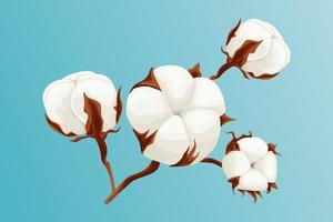 hermosa rama de algodón sobre fondo azul