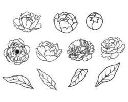 Outline peony flowers vector collection