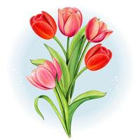 watercolor red and pink tulip bouquet vector