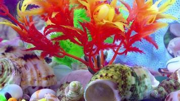 peixes em um aquário