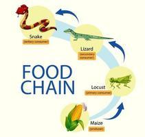 Science food chain diagram vector