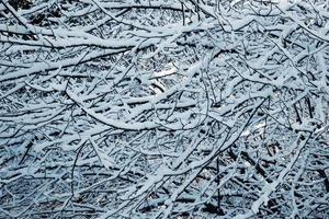 nieve en las ramas de los árboles foto