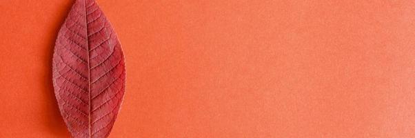 Una sola hoja de cerezo de otoño rojo caído sobre un fondo de papel rojo foto