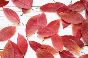 Varias hojas caídas de otoño rojo sobre un fondo de tablero de madera clara foto