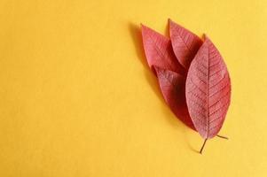 varias hojas de cerezo de otoño rojo caído sobre un fondo de papel amarillo plano foto