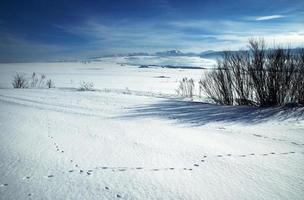 prados nevados en una montaña foto