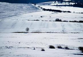 campos nevados y prados foto