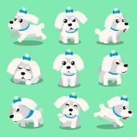 Cartoon character maltese dog poses vector