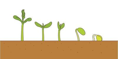 The stage in which the sprout grows. vector