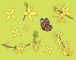 Forsythia and butterfly. vector