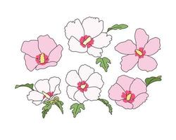 Rose of sharon flowers are in bloom. vector