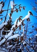 nieve en las ramas foto